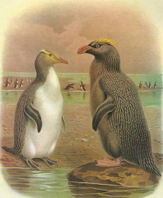 Yellow Eyed Penguin And Snares Crested Penguin  Poster by J G Keulemans