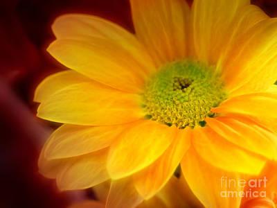 Yellow Flowerglow Poster by Lutz Baar