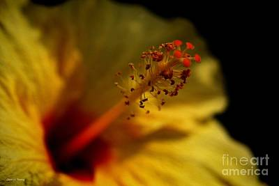 Yellow Hibiscus Painted Poster by Cheryl Young