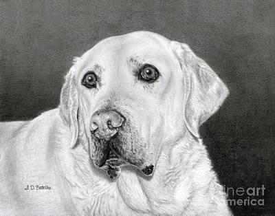 Yellow Labrador Retriever- Bentley Poster by Sarah Batalka