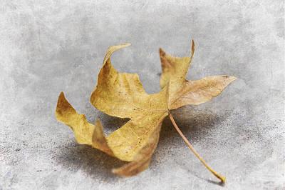 Yellow Maple Leaf Poster by Mariola Szeliga