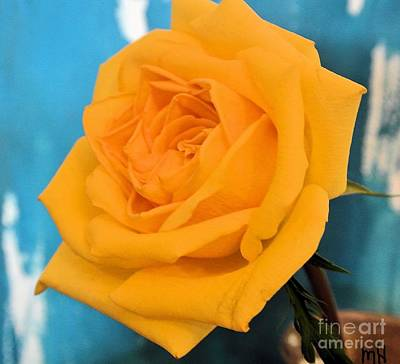 Yellow Rose Against Turquoise Poster by Marsha Heiken