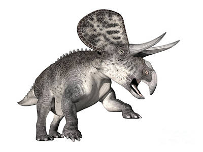 Zuniceratops Dinosaur, White Background Poster by Elena Duvernay