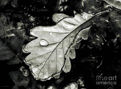 Leaf Poster by Odon Czintos