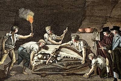 1770 Maastricht Mosasaur Poster by Paul D Stewart