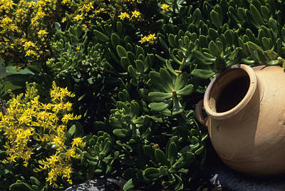 A Clay Planter Surrounded By Succulent Poster by David Evans