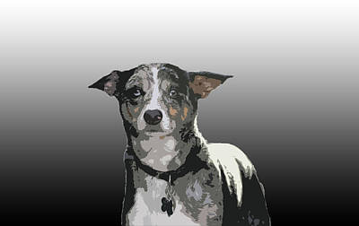 Australian Cattle Dog Sheltie Mix Poster by One Rude Dawg Orcutt