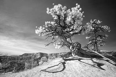Bryce Canyon Tree Sculpture Poster by Mike Irwin