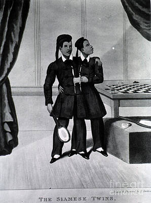 Chang And Eng Bunker, The Original Poster by Science Source