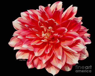 Dahlia Poster by Cheryl Young