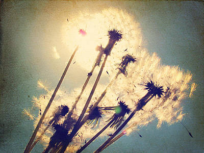 Dandelions For You Poster by Amy Tyler