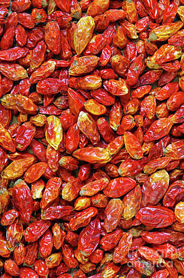 Dried Chili Peppers Poster by Carlos Caetano