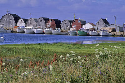 Fishing Shacks Line The Bay At Malpeque Poster by Leanna Rathkelly