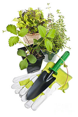 Gardening Tools And Plants Poster by Elena Elisseeva