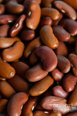 Kidney Bean Poster by Photo Researchers, Inc.