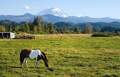 Paint Horse And Mount Rainier Poster by Stacey Lynn Payne