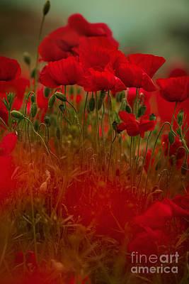 Poppy Flowers 06 Poster by Nailia Schwarz
