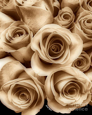 Sepia Roses Poster by Cheryl Young