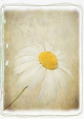 Simple Daisy Poster by Julie Williams