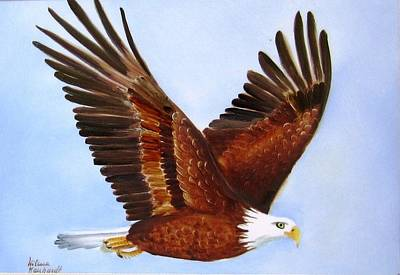 1149b  Bold Eagle 3 Poster by Wilma Manhardt