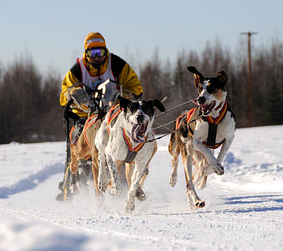 2011 Limited North American Sled Dog Race Poster by Gary Whitton