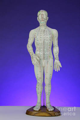 Acupuncture Model Poster by Photo Researchers, Inc.
