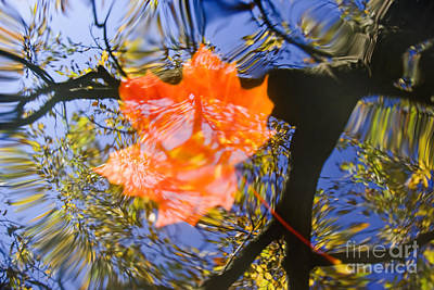 Autumn Leaf On The Water Poster by Michal Boubin