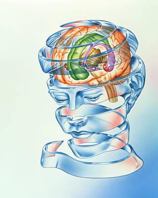 Brain Limbic System Poster by John Bavosi