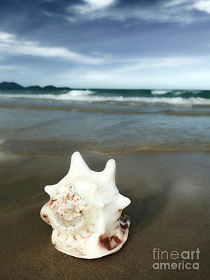 Seashell Poster by MotHaiBaPhoto Prints