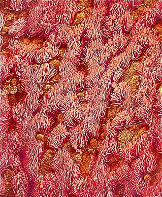 Trachea, Sem Poster by Susumu Nishinaga
