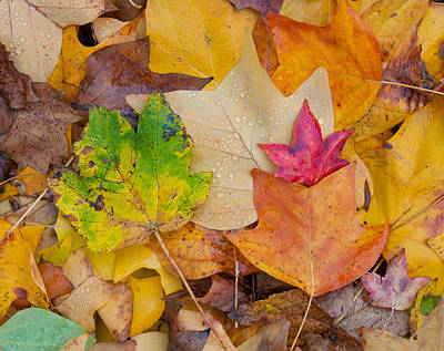 Autumn Leaves Poster by Hans Engbers