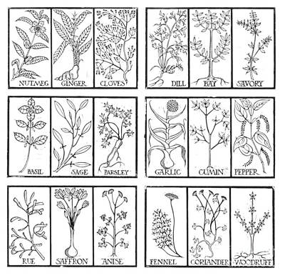 Edible Herbs Poster by Science Source