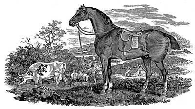 Horse Poster by Granger
