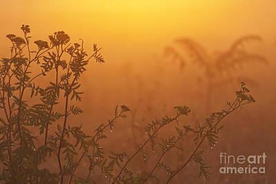 Meadow Flowers Poster by Odon Czintos