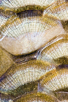 Fish Scales Background Poster by Odon Czintos