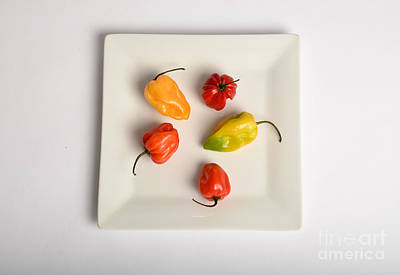 Habanero Chili Pepper Poster by Photo Researchers, Inc.