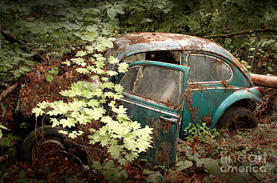 A '65 Bug In The Overgrowth Poster by Michael David Sorensen