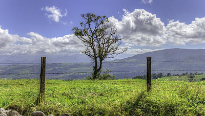 A Fence And A Tree 3552hdr Poster by Sortarivs Arts