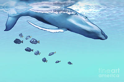A Humpback Whale Dives Into The Blue Poster by Corey Ford