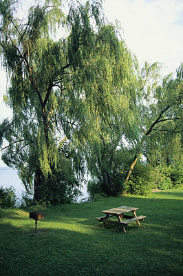 A Willow-lined Lakeside Picnic Area Poster by Skip Brown