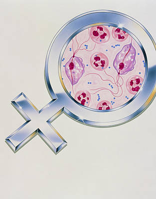 Abstract Artwork Of Trichomonas In Vaginitis Poster by John Bavosi