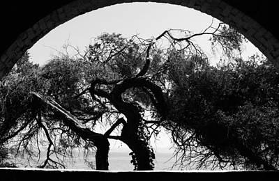 Alcatraz Tree Poster by Ty Helbach