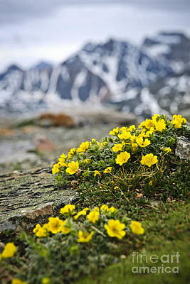 Alpine Meadow  Poster by Elena Elisseeva