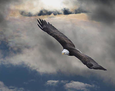 An Eagle In Flight Rising Above The Poster by Robert Bartow