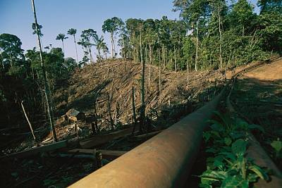 An Oil Pipeline Running Through Amazon Poster by Steve Winter
