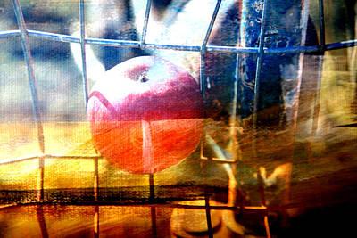 Apple In A Basket Poster by Toni Hopper