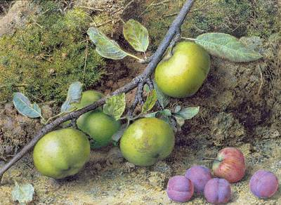 Apples And Plums On A Mossy Bank Poster by John Sherrin