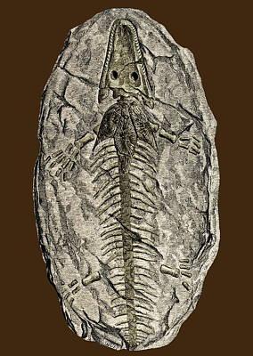Archegosaurus Decheni, Amphibian Fossil Poster by Sheila Terry