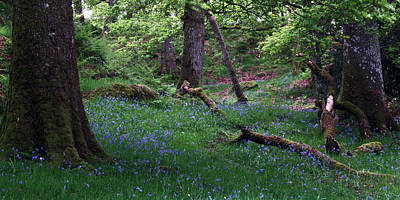 Ashness Woodland Poster by Steve Watson