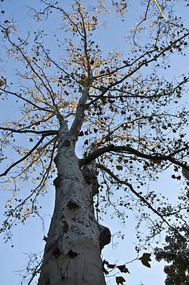 Autumn Oak Poster by Bill Cannon